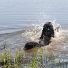 Eine Runde Schwimmen