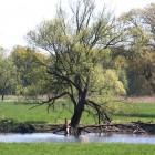 Solitär am Oder-Nebenarm