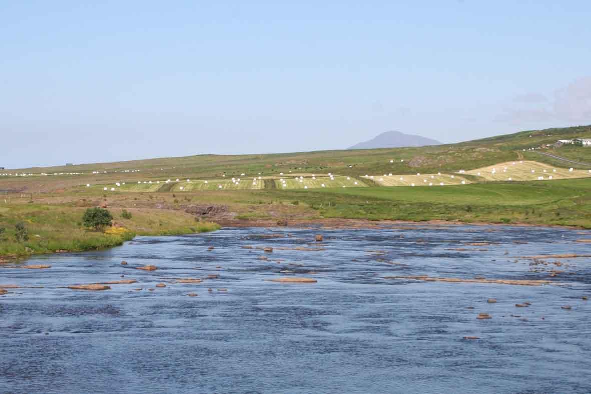 Landwirtschaft in Island