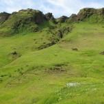 Grüner Felsenhang