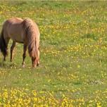 Pferd und Wiese