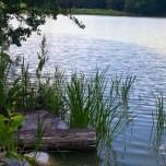Uferdetail