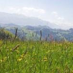 Wiese mit Alpenblick