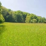 Wiese, Wald und Himmel