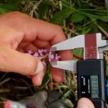 Blütenblätter messen