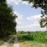 Am Maisfeld entlang