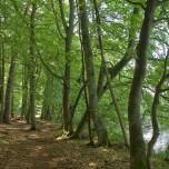 Rundwanderweg VII