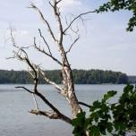 Toter Baum II