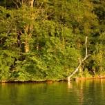 Ufer am Abend I