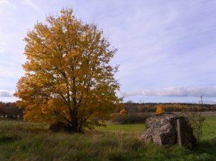 Uppsala im Herbst