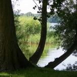 Ufer des Schwielochsees