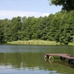 Ufer des Kleinen Schwielochsees