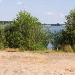 Ufer am Großen Schwielochsee