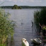 Kleine Rohrinsel im Großen Schwielochsee