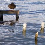 Ruheplatz mit Ente