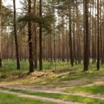 Neue Aufforstung im Wald