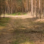 Wegsperre im Wald