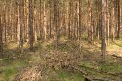 Altholz als Dünger im Wald