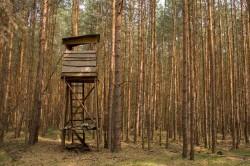 Kanzel der Jäger im Wald