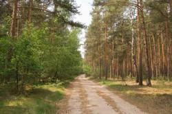 Mischwald und Monokultur