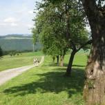 Wanderweg Donausteig
