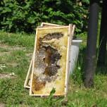 Bienenwaben am Donausteig