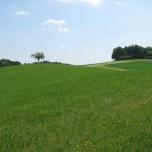 Feldblick