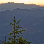 Kleine Kiefer im Morgenlicht, dahinter Berge