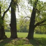 Drei Bäume im Gegenlicht