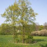 Zwei eingezäunte Bäume