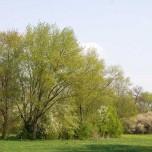 Bäume im Ilm-Park