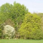 Tolle Bäume im Park an der Ilm