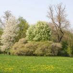 Blühende Bäume im Park an der Ilm