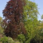 Roter und grüner Baum im Park an der Ilm