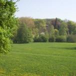 Frühlingsfärbung im Park an der Ilm