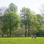 Bäume im Park an der Ilm