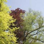 Drei Baumfarben im Park Belvedere bei Weimar