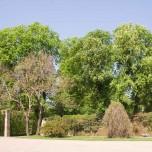 Kastanien im Park Belvedere
