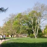 Majestätische Bäume im Park Belvedere