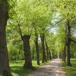 Allee im Park Belvedere