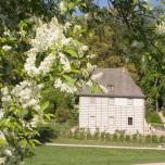 Goethes Gartenhaus mit Flieder
