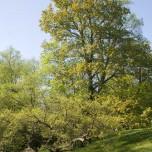 Bäume im Garten von Goethe