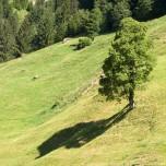 Schatten eines Baumes