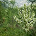 Seltsame Pflanze
