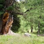 Brauner Baum in grüner Landschaft