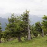Sturmerprobte Bäume