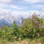 Pflanzen der Alpen