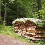Holzstapel am Wanderweg zum Schleierwasserfall