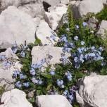 Überlebenskünstler - Blühende Pflanze zwischen Steinen