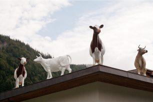 Schaukäserei in Gastein mit Kühen auf dem Dach